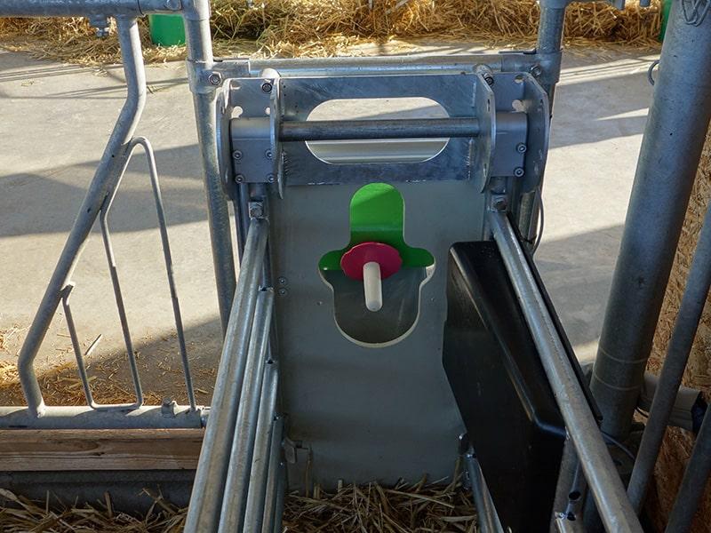 feeding box with a teat for calves