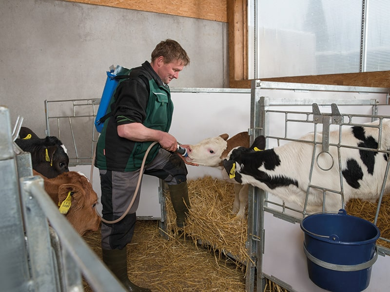Feeding calves with Comfort Caddy
