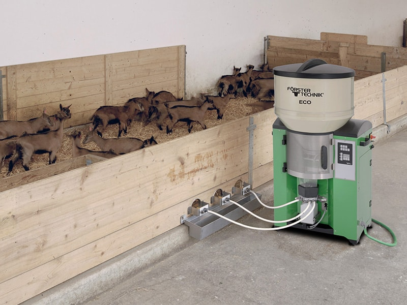 lamb feeder with baby goats