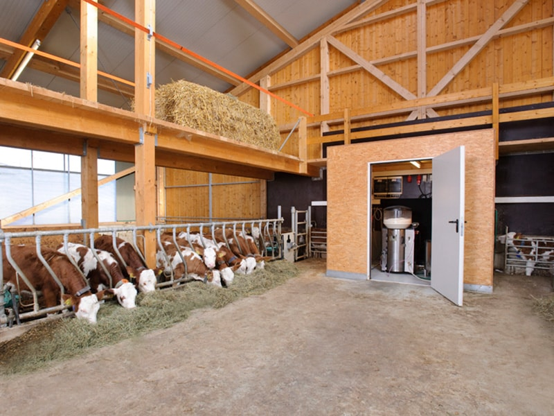 Automatic feeder for calves